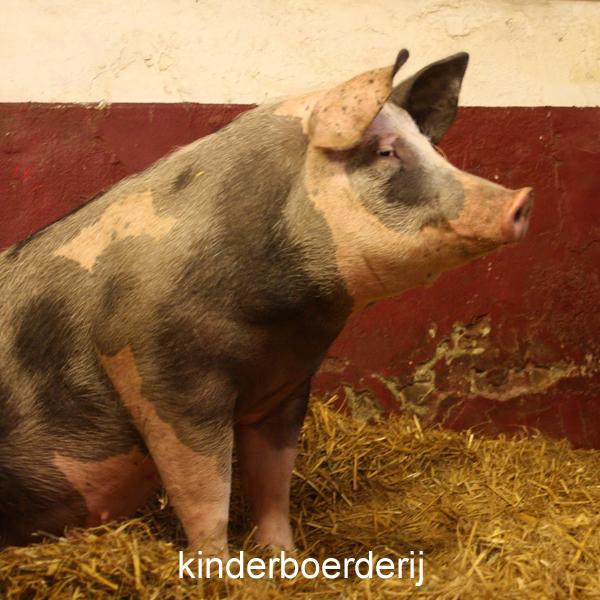 Kinderboerderij in Geldrop
